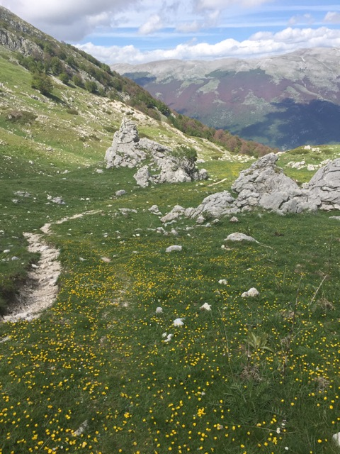 wildflower meadows of the Abruuzzo