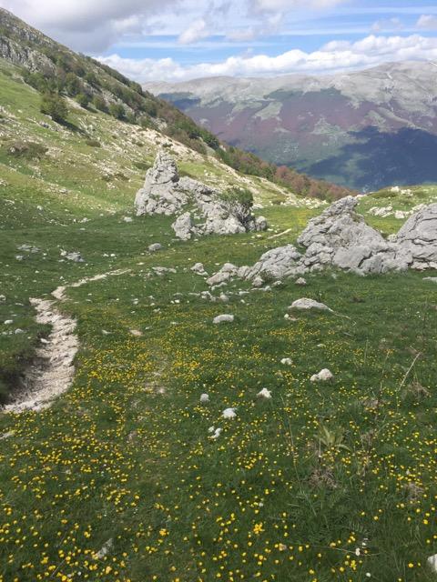 wildflower meadows of the Abruuzzo