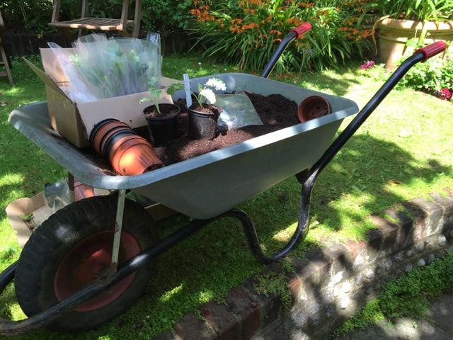 garden wheelbarrow full