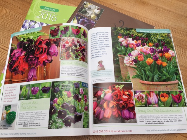 tulips in magazine