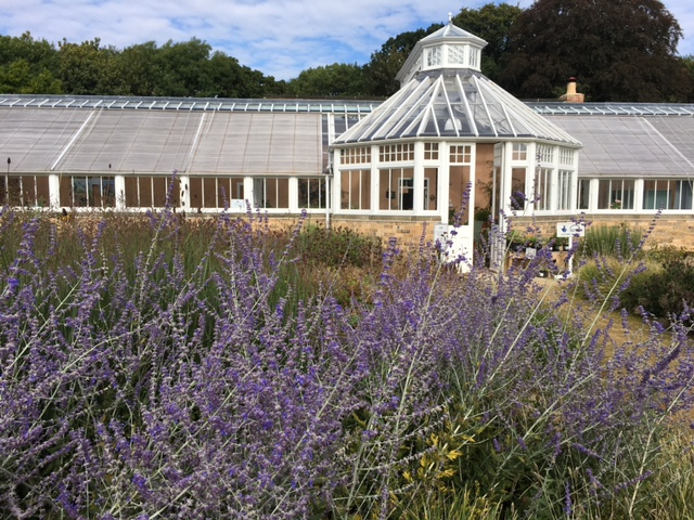 new-greenhouse-at-scampston
