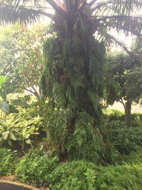singapore vegetation