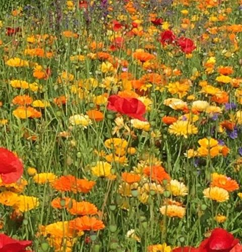 Cottage Garden Flowers The Enduring Gardener