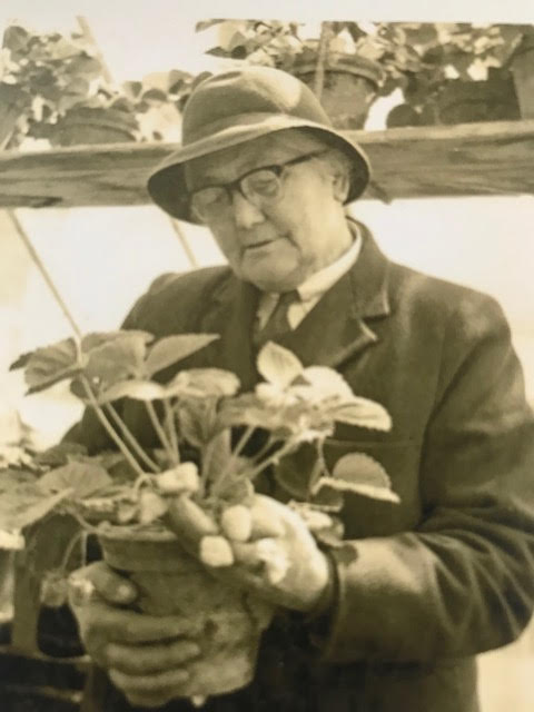 beatrix Havergal looking at plant