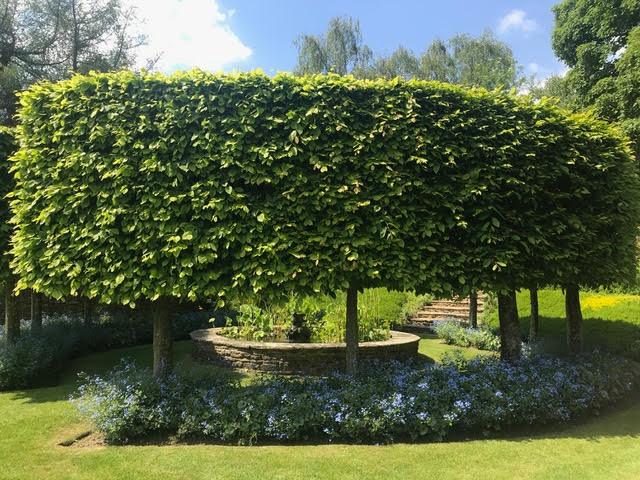beech hedge, hornbeam