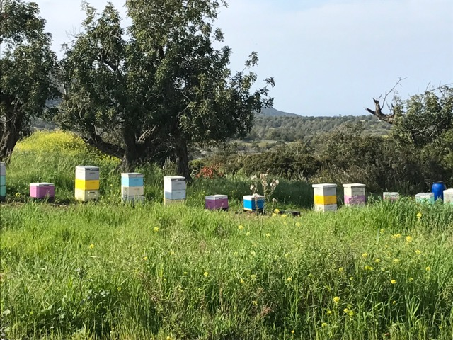 colourful bee hives