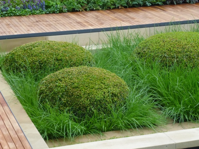 buxus shaped like pillows and surrounded by ornamental grasses