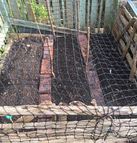 barricades to protect the garden bed from foxes