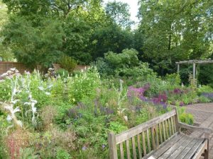 wooden garden bench in foreground with planting to rear