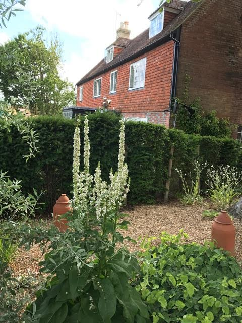 rhubarb forcers,gravel garden