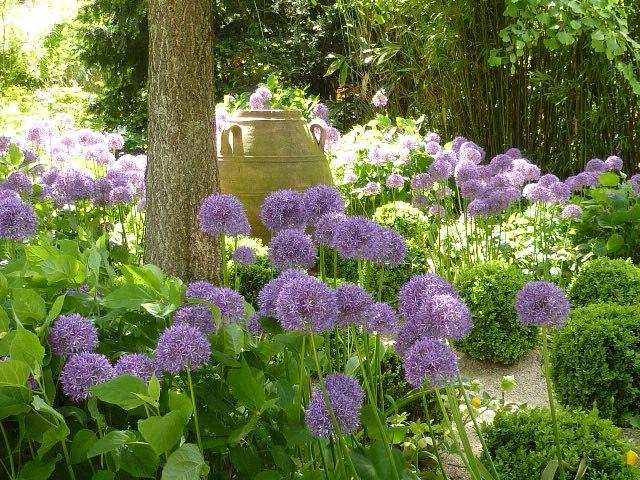jardin d 39 agapanthe the enduring gardener. Black Bedroom Furniture Sets. Home Design Ideas