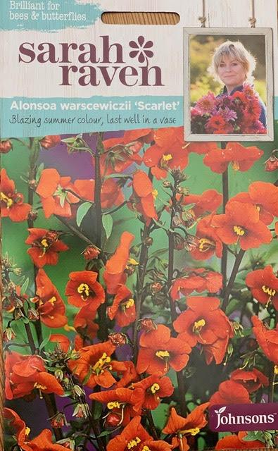 Alonsoa warscewiczii Scarlet