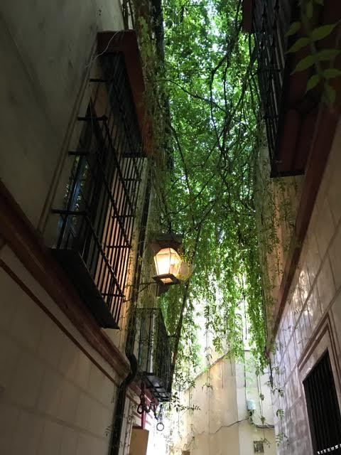 plant-hung alleyway