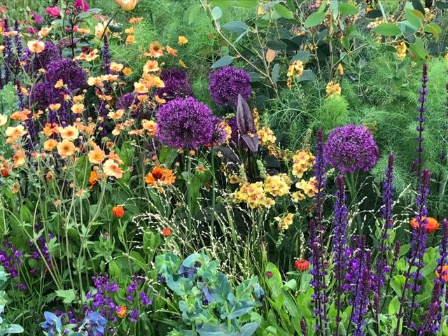 purple and orange planting