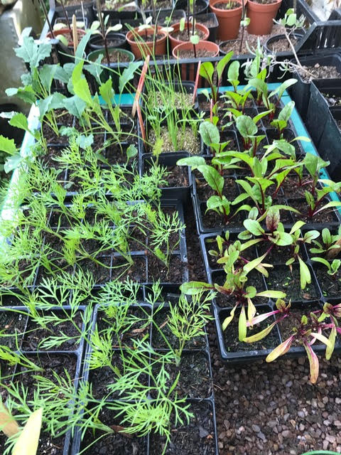 plants growing in peat free compost