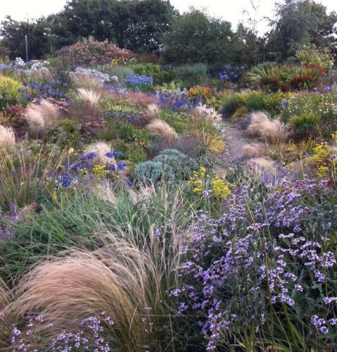 mixed planting with grasses