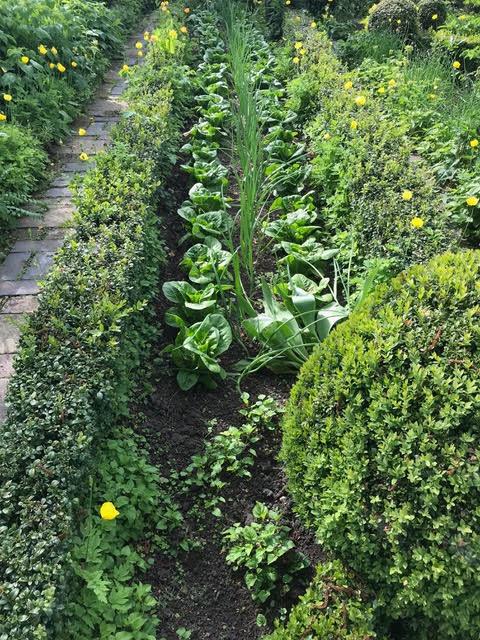 potager, neat garden border