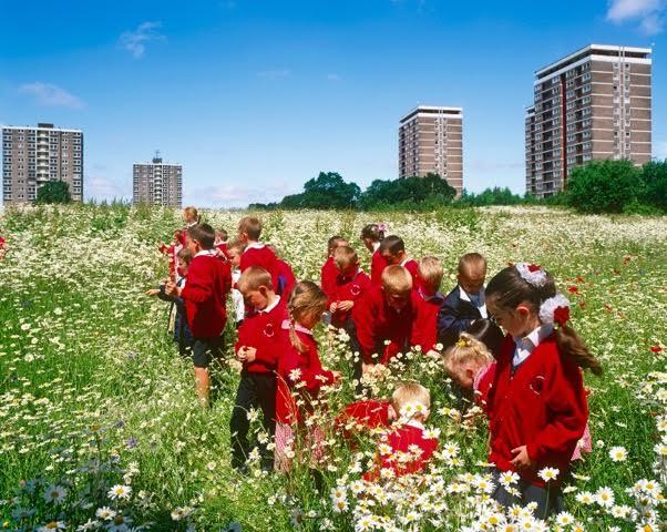 wildflower centre